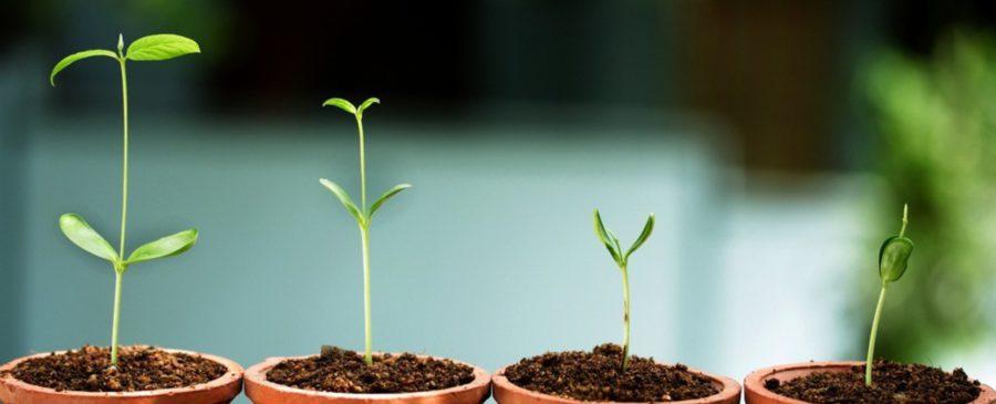 Startup Wachstumsprobleme